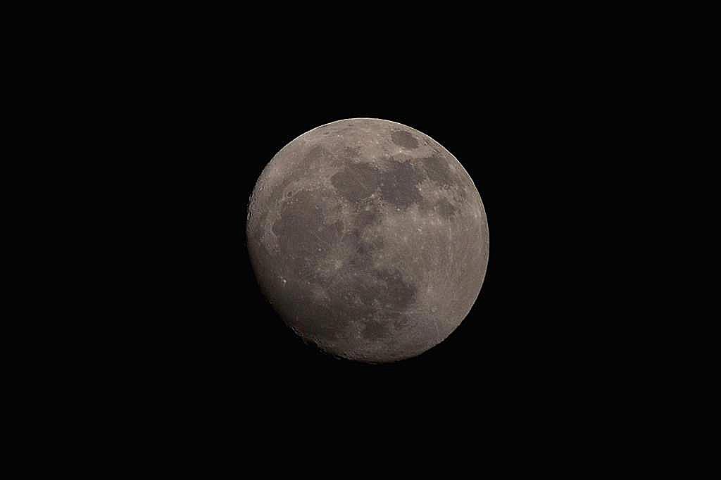 梅のみを食べるシメ/モズのペア/今夜のお月さん_b0024798_21445530.jpg