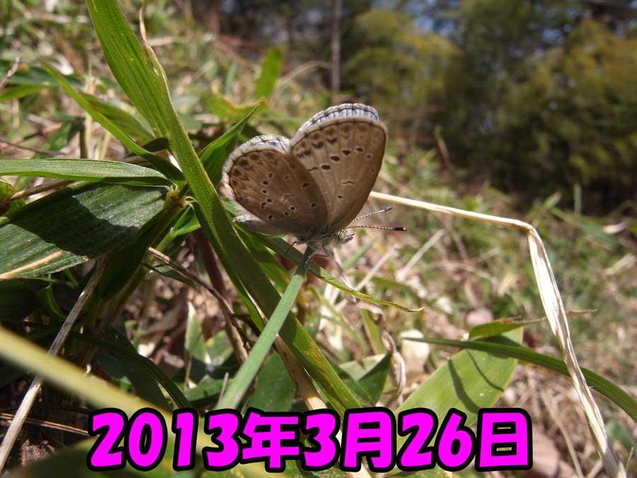 e0253104_2395587.jpg
