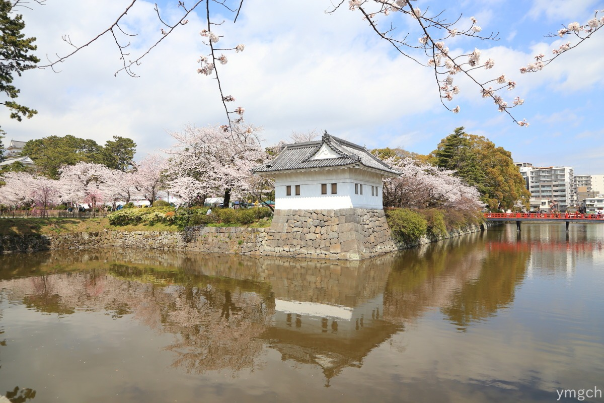 小田原城址の桜(1)_f0157812_20542100.jpg