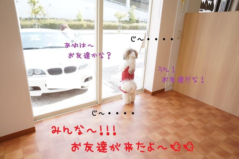d0220513_17333687.jpg