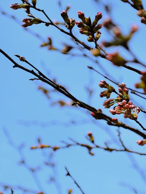 春です。_a0159215_182867.jpg
