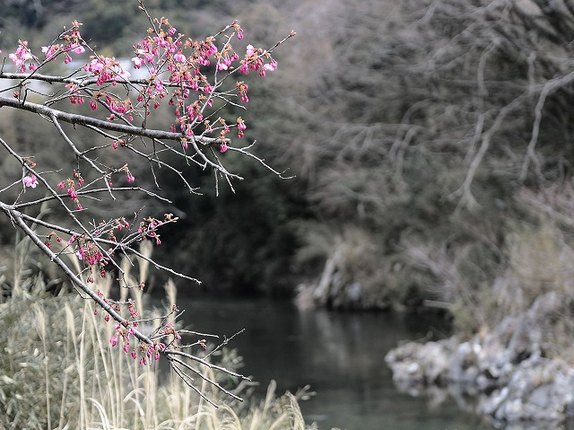 春です。_a0159215_18316.jpg
