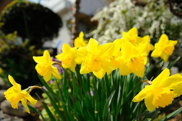 春です。_a0159215_185353.jpg
