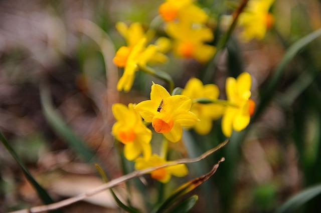 春です。_a0159215_185774.jpg