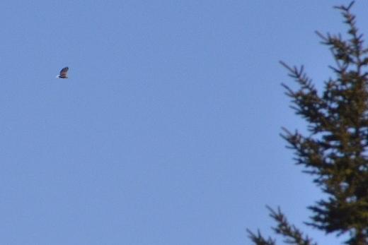 2013年3月26日(火):晴れ続いてます[中標津町郷土館]_e0062415_19225396.jpg