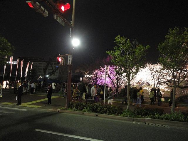 桜の季節になりました!!_a0110720_18282283.jpg