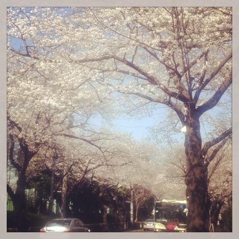 卒業記念品&今年の桜_a0137727_2323198.jpg