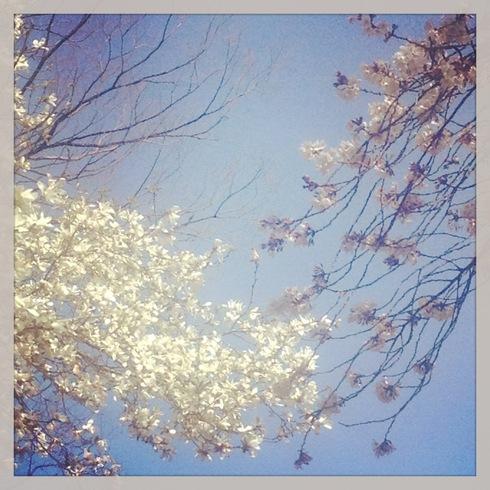 卒業記念品&今年の桜_a0137727_23243140.jpg