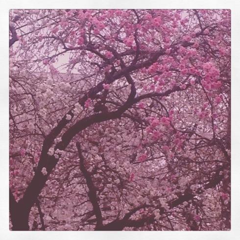 卒業記念品&今年の桜_a0137727_2325185.jpg