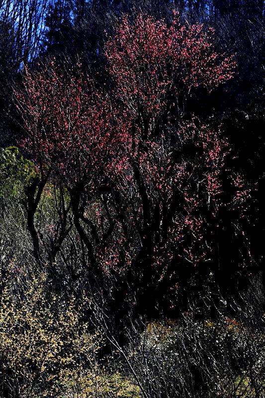 福島市渡利  「花見山」_d0106628_1113571.jpg
