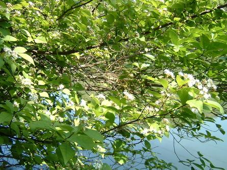 孝子の森の植物たち   by   (岡田)_c0239329_0311353.jpg