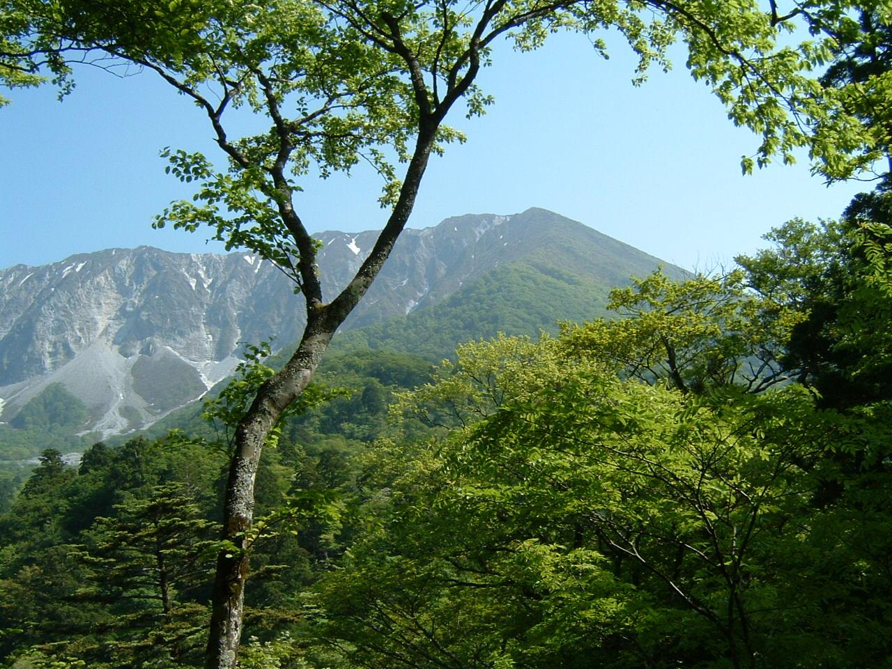 旅行先の植物   by (岡田)_c0239329_140423.jpg