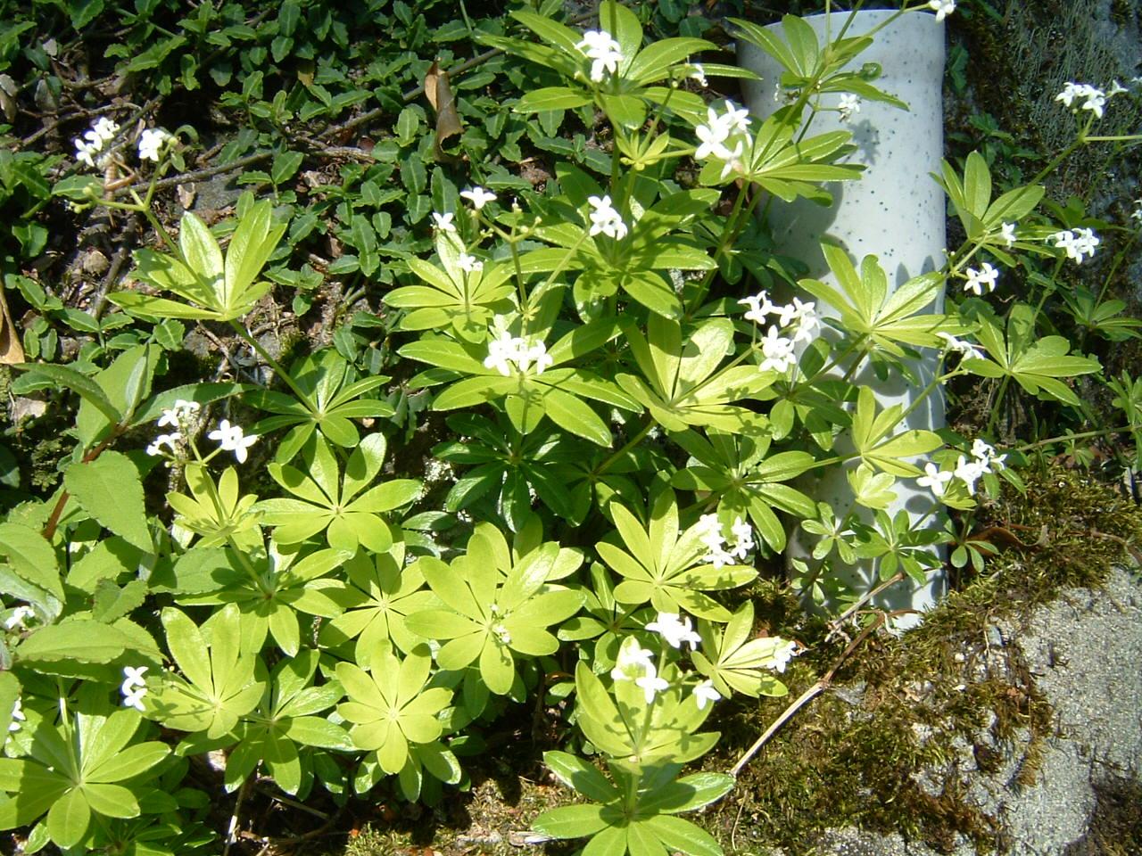 旅行先の植物   by (岡田)_c0239329_140973.jpg