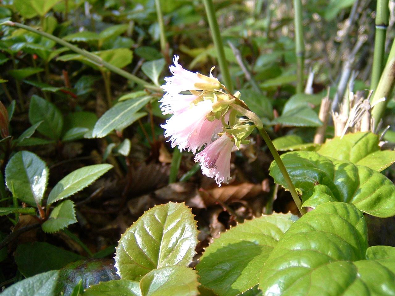 旅行先の植物   by (岡田)_c0239329_141071.jpg