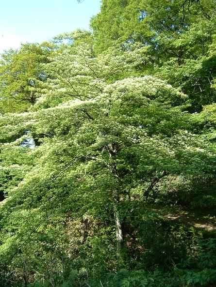 旅行先の植物   by (岡田)_c0239329_1413292.jpg