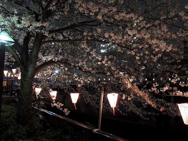 夜桜プチ宴会_c0062832_4562788.jpg
