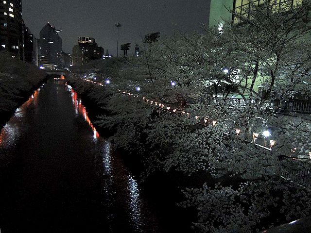 夜桜プチ宴会_c0062832_4564039.jpg