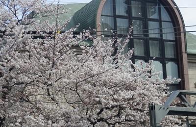 創価学会本部と桜_c0180341_17521919.jpg