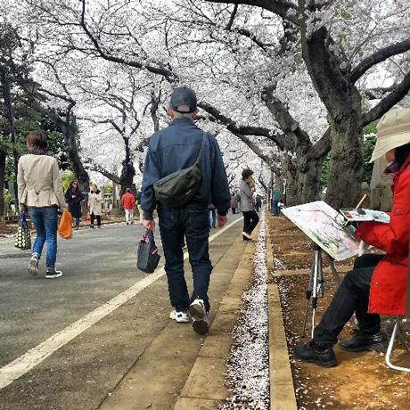 谷中霊園の桜 と 谷中の寺猫_f0117059_18445489.jpg