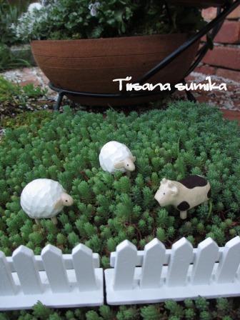 """春の庭に""""羊が1匹~""""""""羊が2匹~""""_a0243064_2072445.jpg"""
