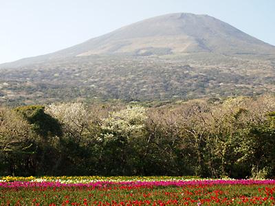 大島桜も綺麗です!_e0097770_215457.jpg