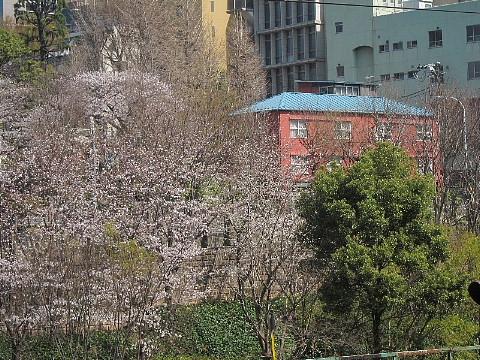 世の中は3日見ぬ間の桜かな。_b0141773_2220278.jpg