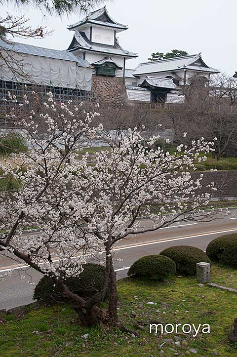撮影日記〜兼六園から金沢城へ_c0085877_7263572.jpg