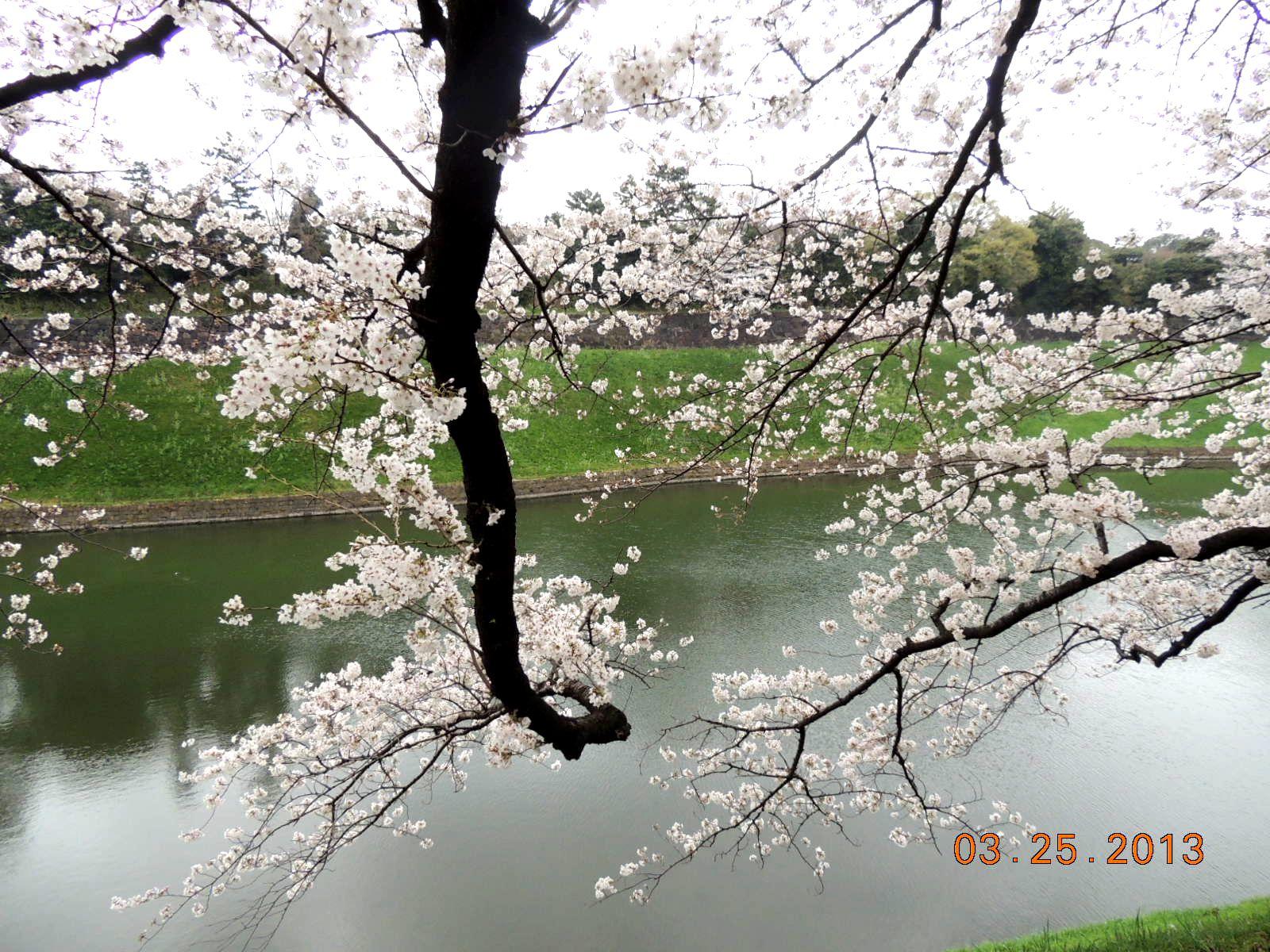 f0104277_6481411.jpg
