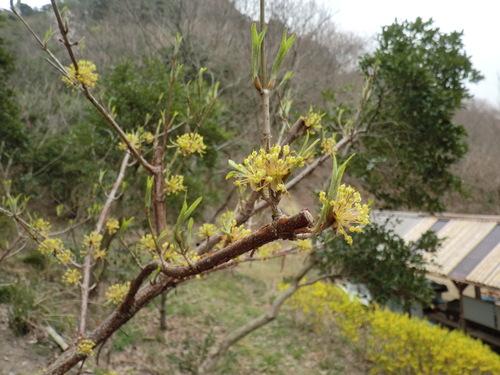 初春の孝子の森①  by   「仁べ」_e0228405_22241535.jpg