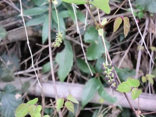 初春の孝子の森①  by   「仁べ」_e0228405_22255596.jpg