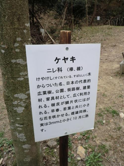 初春の孝子の森①  by   「仁べ」_e0228405_22411464.jpg