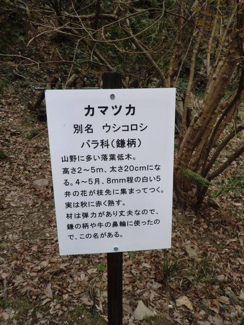 初春の孝子の森①  by   「仁べ」_e0228405_22413231.jpg