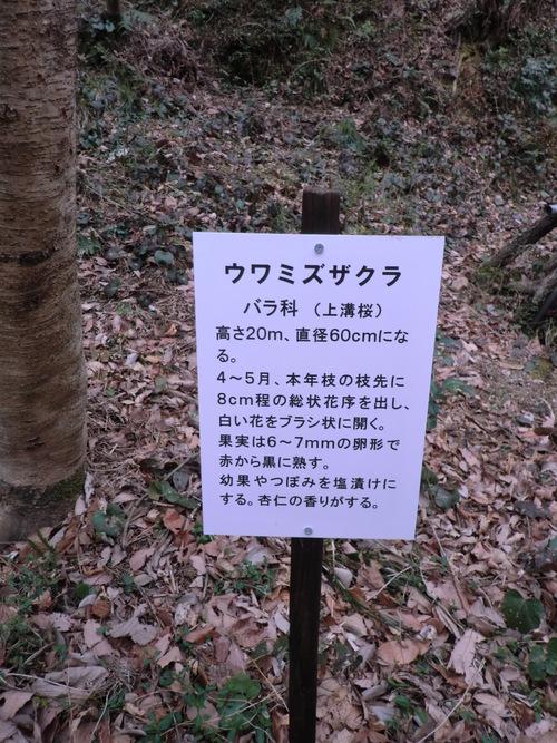 初春の孝子の森①  by   「仁べ」_e0228405_22415438.jpg