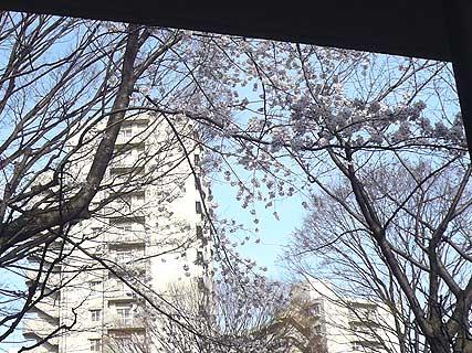 ヨガ教室の窓の外の桜_d0020309_10475045.jpg