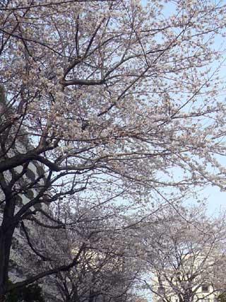 ヨガ教室の窓の外の桜_d0020309_10524963.jpg