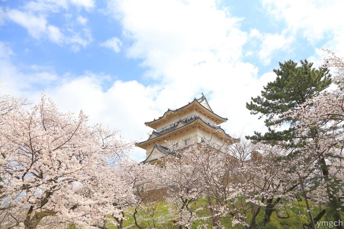 小田原城址の桜(2)_f0157812_16195727.jpg