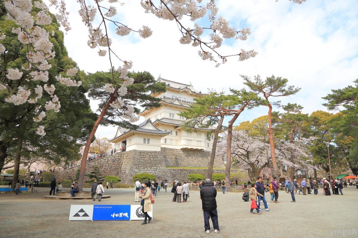 小田原城址の桜(2)_f0157812_16213854.jpg