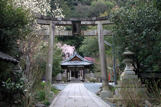 盛りのしだれ3 大豊神社_e0048413_1436933.jpg