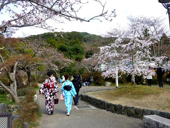 盛りのしだれ5 円山公園_e0048413_214065.jpg