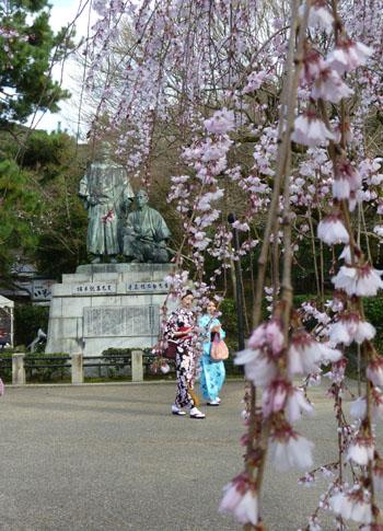盛りのしだれ5 円山公園_e0048413_2142493.jpg