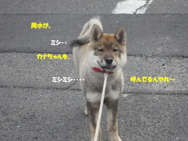 f0143123_20104783.jpg