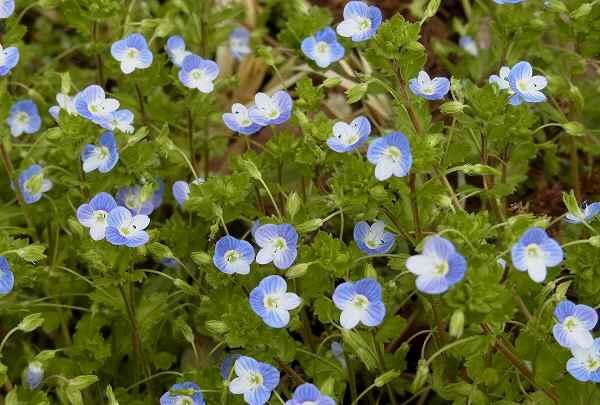 畦道にも春の色_f0214527_1040268.jpg
