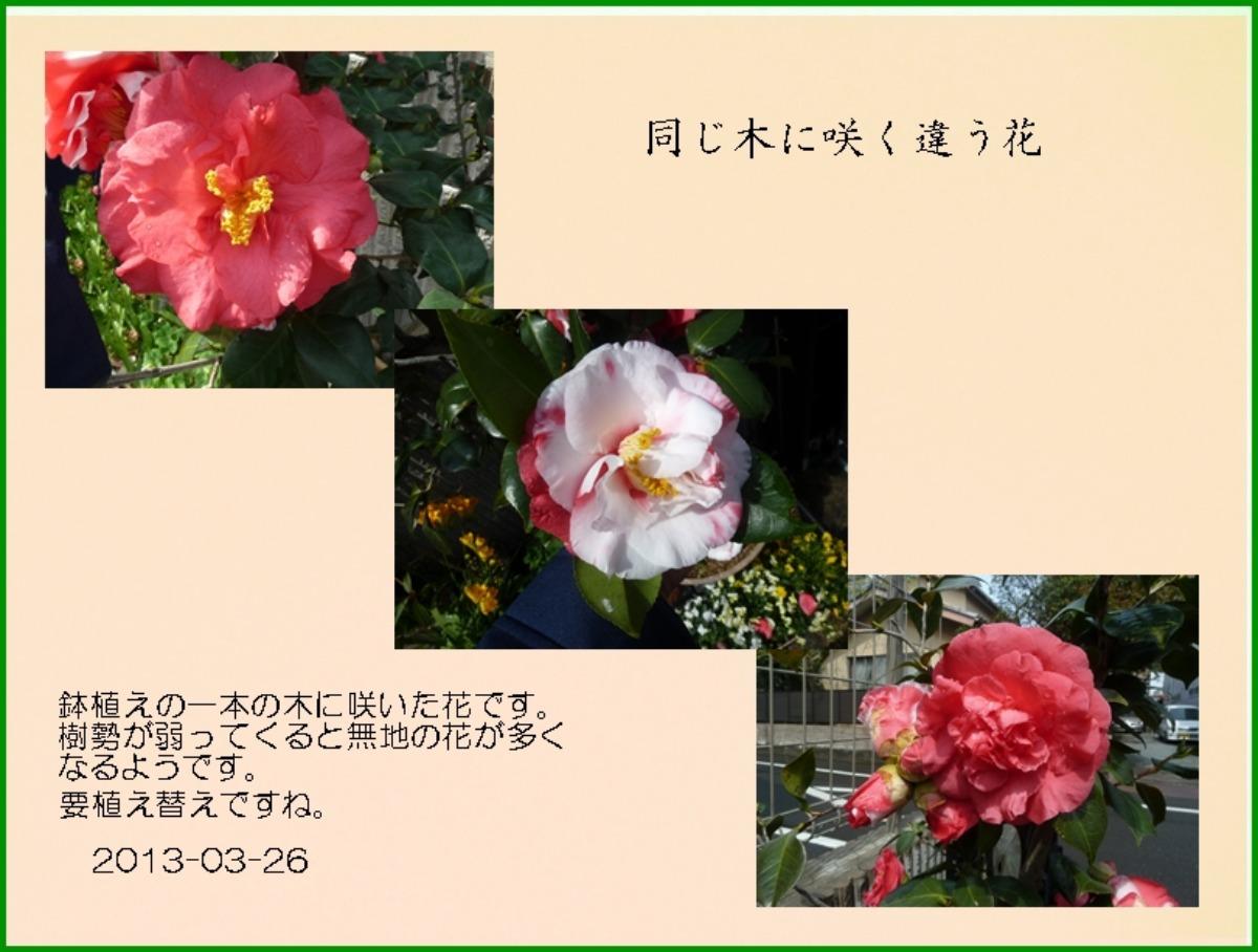 e0033229_2212795.jpg