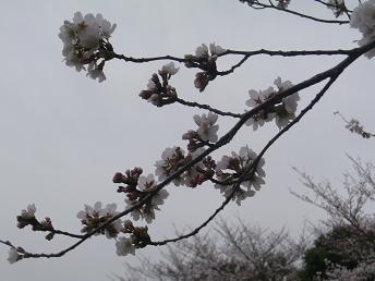 春ですね。_a0139242_5173139.jpg