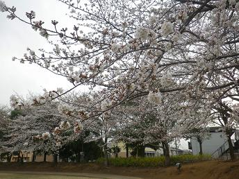 春ですね。_a0139242_517376.jpg