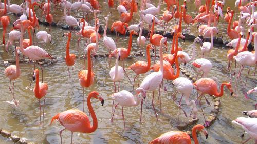 Flamingo_d0261148_19232094.jpg