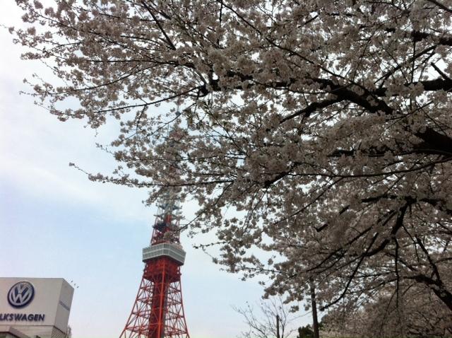 もう一枚、桜の写真を・・・・。&3月27日(水)のランチメニュー_d0243849_022921.jpg