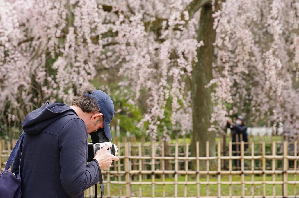 桜 ~法金剛院~立本寺~京都御苑~_f0152550_23143051.jpg