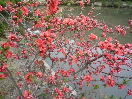 母と法金剛院へ・お客様の桜や蝶の着物姿。_f0181251_20274083.jpg