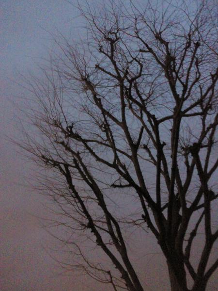 2013年3月 課題写真 「今日見た空は」_f0168968_2225951.jpg